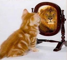 1 lion inside